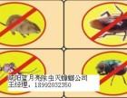 咸阳除虫灭蟑螂 地毯 沙发 地面清洗 除老鼠收费低