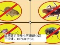 咸阳灭蟑螂 灭老鼠 餐厅油烟机清洗 地毯 沙发清洗 保洁