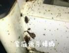 黄山专业灭白蚁、灭飞虫、除四害、杀虫公司、除虫灭鼠