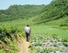 金口河区共安 土地 300000平米