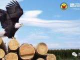 鹰冠杉木生态板为生活呈现环保时尚的高品质