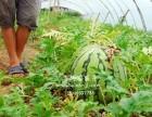 上海农家乐一日游 摘西瓜小番茄葡萄 钓鱼划船烧烤