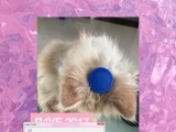 八个月未绝育公加菲猫