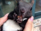 活泼可爱的松鼠宝宝
