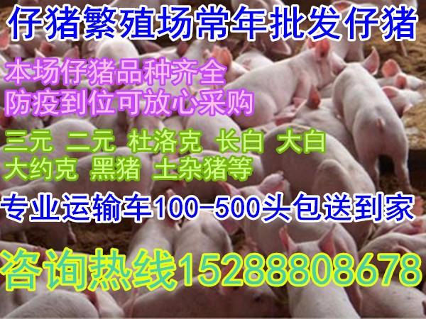 18年较新小猪苗批发产区