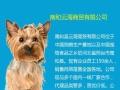 狗粮猫粮大批发 承接白包粮定质量
