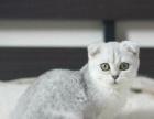 三里屯最大宠物猫繁育中心五六十只幼猫待售