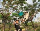 天涯犬舍 承接边牧飞盘训练 专业的训练
