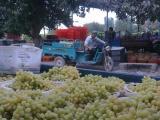 葡萄采購代理--優質服務