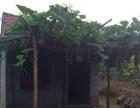 山东省淄博市沂源5亩果园带水池出租