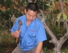 专业杀虫灭鼠,白蚁防治 环保用药,对人体安全无害