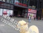 上海出租设特兰矮马江浙沪出租蓝孔雀浙江租羊驼上海租孔雀