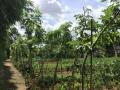 海秀 丘海大道海南花卉产业园里 土地 1500平米