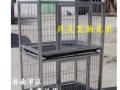 批发零售狗罐头 猫罐头 珍味包 各种宠物零食量大价优