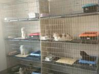 宠物寄养 龙猫 兔子 荷兰猪 猫咪 貂等 用品免费