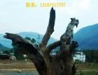 牛血树、根雕原料