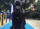 石家庄纯种卡斯罗幼犬价格图片现在三个月的卡斯罗犬多少钱一只