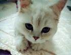 预购宠物猫的请看过来!