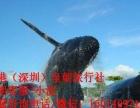 香港旅游三天两晚游(海洋公园+自由行)249/人