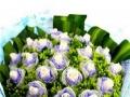 港北玫瑰花束百合花束捧花组合花束市区内免费送花上门