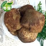 东北小猴头菇大货批发食用菌健康养生食材一
