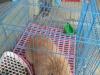 宠物兔垂耳兔活体,6