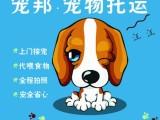 佛山宠物托运哪家好 找宠邦宠物托运 专业安全有保障 全国往返