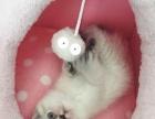 皇家1-4月幼猫奶糕BK34 两袋