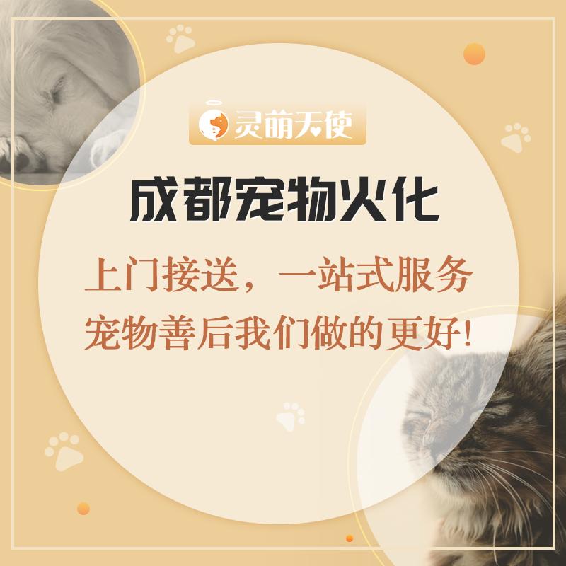 成都寵物火化/殯葬/安樂/價格實惠/全天免費上門接送