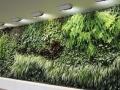 合肥瑶海区仿真植物墙 仿真草坪 花卉布景