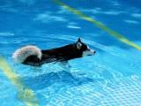 广州天河区宠物训练学校 狗狗训犬基地 可上门接送