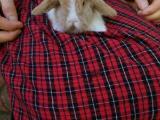 长期底价出售可爱的垂耳兔
