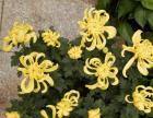 青岛城阳最好的绿植鲜花租摆小区绿化维护施工 园林
