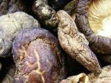厂家直销各种优质菌种 干蘑菇 干香菇