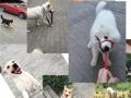 【中型犬】家庭式宠物寄养-可视频看环境
