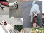 【中型犬】家庭式宠物寄养-可看环境