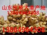 山东大姜 生姜产地