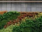 普陀光新仿真花、屋顶绿化、垂直绿化公司