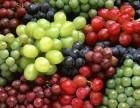 湖北葡萄成熟了,欢迎大家来看看