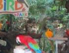 百鸟园鸵鸟养殖鸵鸟展览百鸟展全国租赁