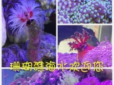珊瑚礁海洋生物