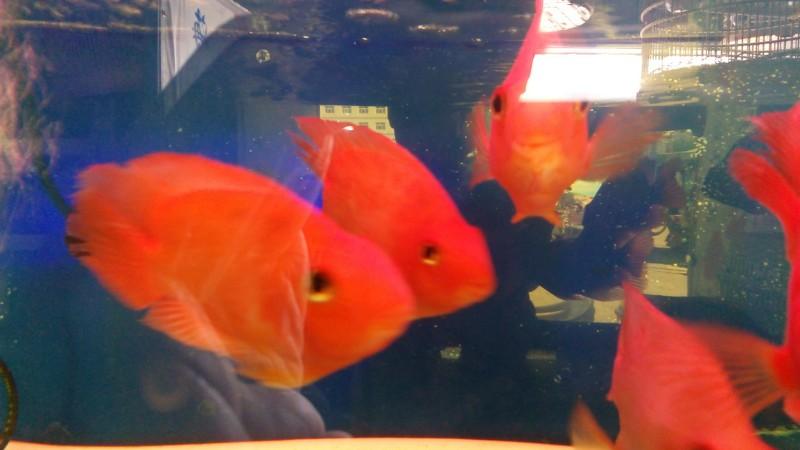 观赏鱼 观赏鸟 宠物店转让