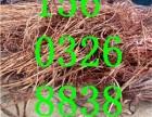 北京废电缆公开回收废电缆废铜