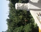 九折出售龙山纪念园公墓