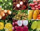 果农 保健品 养生产品长期供货