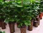 惠州开张开业花篮配送生日周年会议鲜花速递绿植