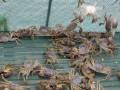 2017苏州太湖大闸蟹上市时间,去哪里吃最正宗