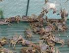 2017苏州太湖大闸蟹上市时间,去哪里吃较正宗