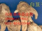 重庆长寿川草阁药材基地推广种植药材新模式:你种植+我销售