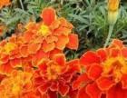 双兴花卉繁殖园